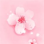 桃花社区免费版软件